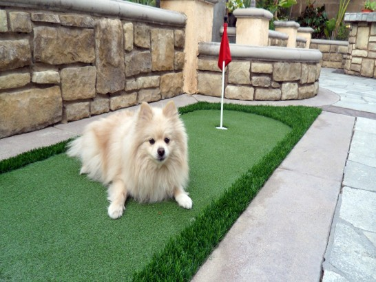 Artificial Grass Photos: Artificial Lawn Home Gardens, California Indoor Dog Park, Backyard Landscape Ideas